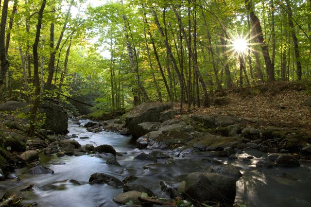 river, forest, sunshine, nature, landscape, trees, leaves, water