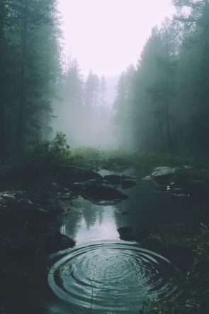 water radiating stream forest