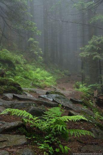 fern-forest-mist