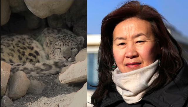 Bayara-Agvaantseren-snow-leopard