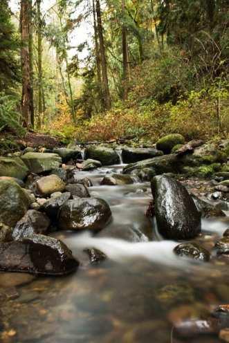 byrne-creek-in-south-burnaby