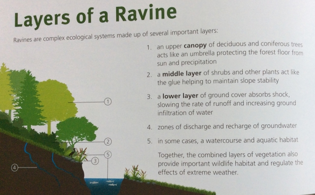 Layers of Ravine