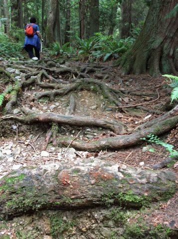 roots copy 2