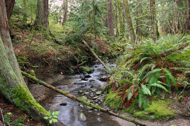 Rainforest Stream2-2012