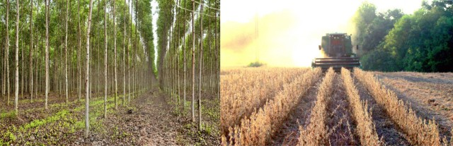 Microsoft Word - TreePlantation-SoybeanRowCrop.docx