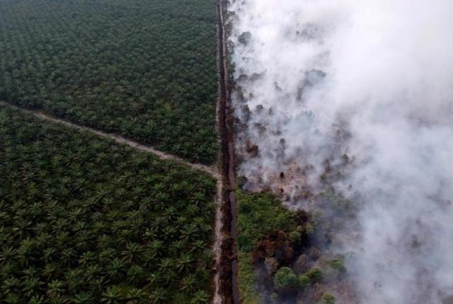 Burning for palm oil plantation indonesia