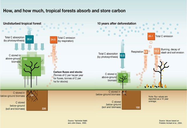 Forest carbon uptake