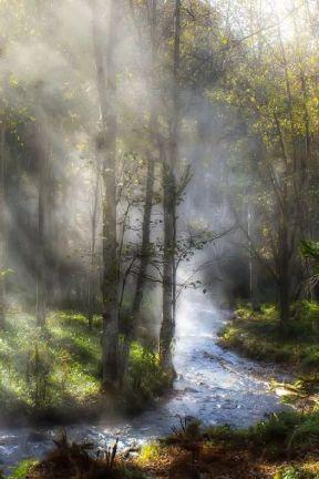 forest mist light stream