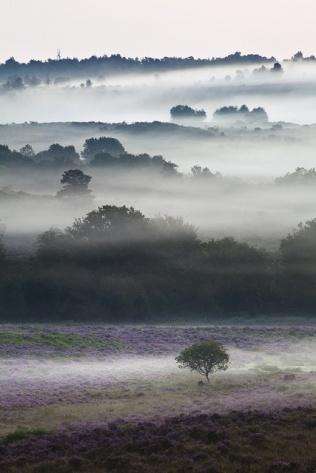 hampshire mist-simone j byrne