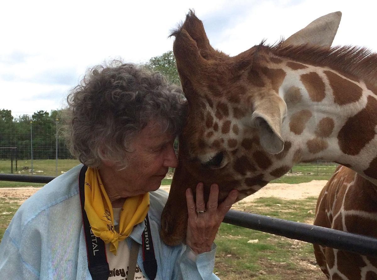 _1anne_innis_dagg_nuzzles_giraffe