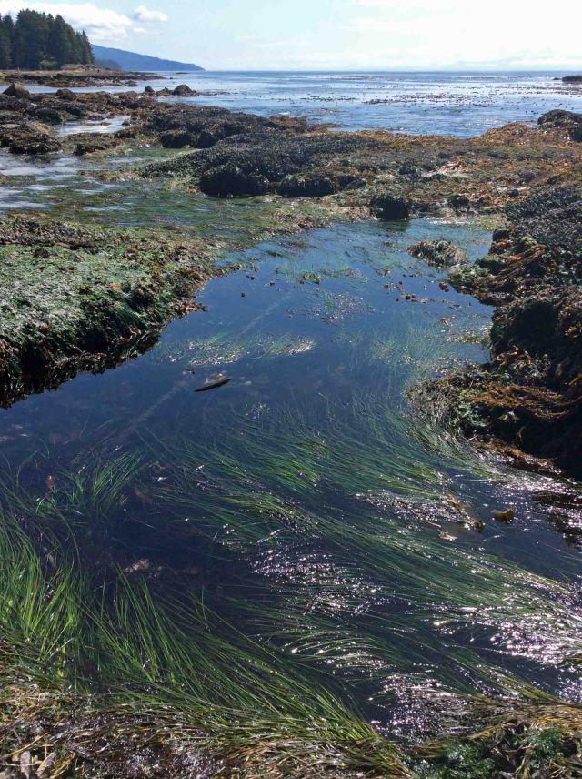 Botanical Beach tidal pools