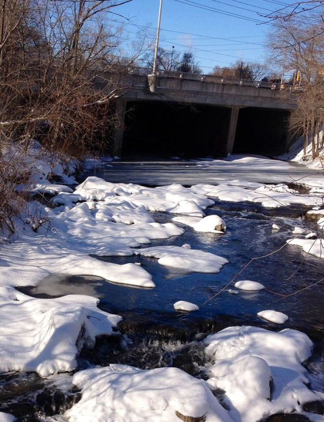 Mimico Creek-winter