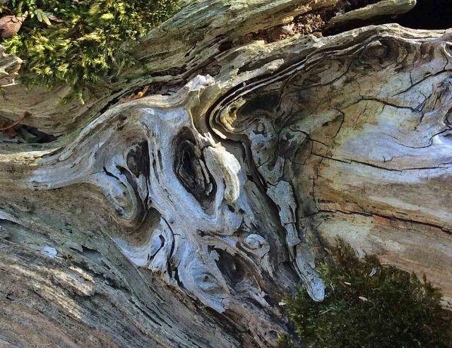Cedar log patterns