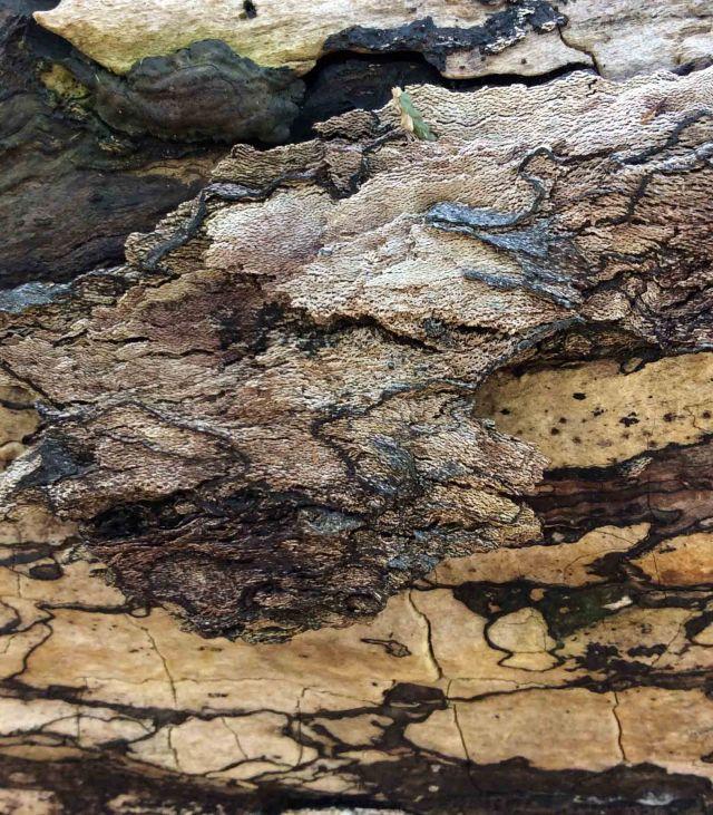 Log patterns 8