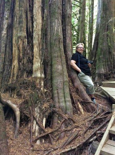 Nina giant cedar-AvatarGrove