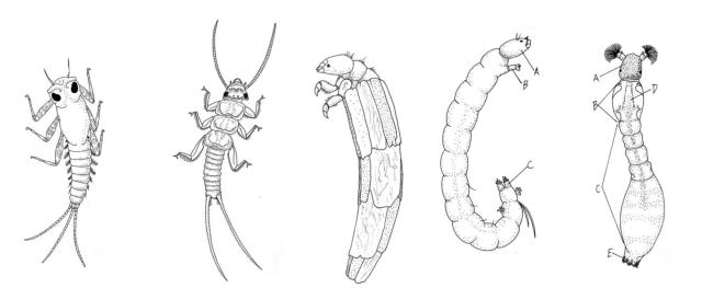 Microsoft Word - Macrobenthos-drawings.docx