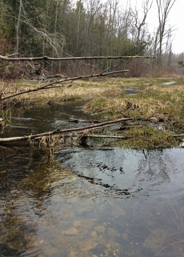 Marsh-stream2-TU