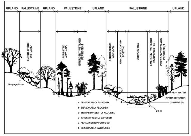Palustrine Wetland-NPWRC