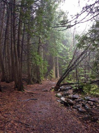 Path Cedar forest TNS