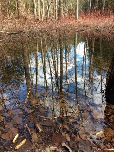 Pond vernal-spring