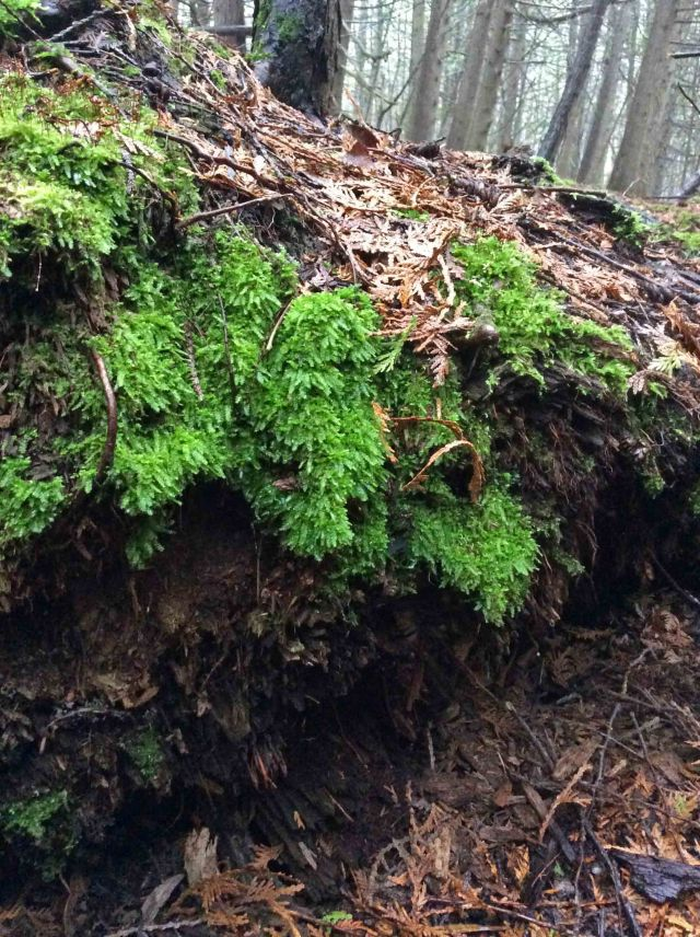 Tree log moss TNS