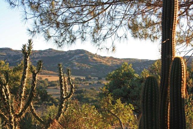 Cacti-California