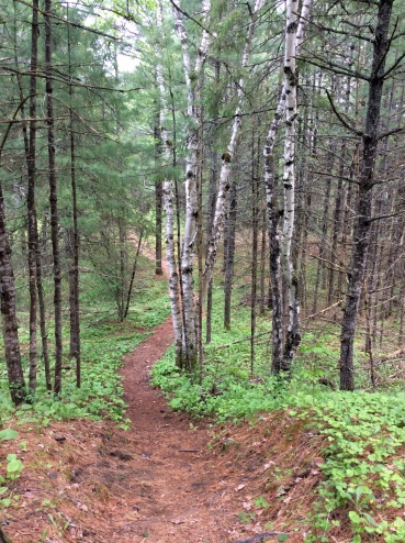 Path birch pine forest PPP